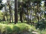 10 Piccaninny Street Macleay Island, QLD 4184