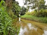 L4 Midgenoo Feluga Road Feluga, QLD 4854